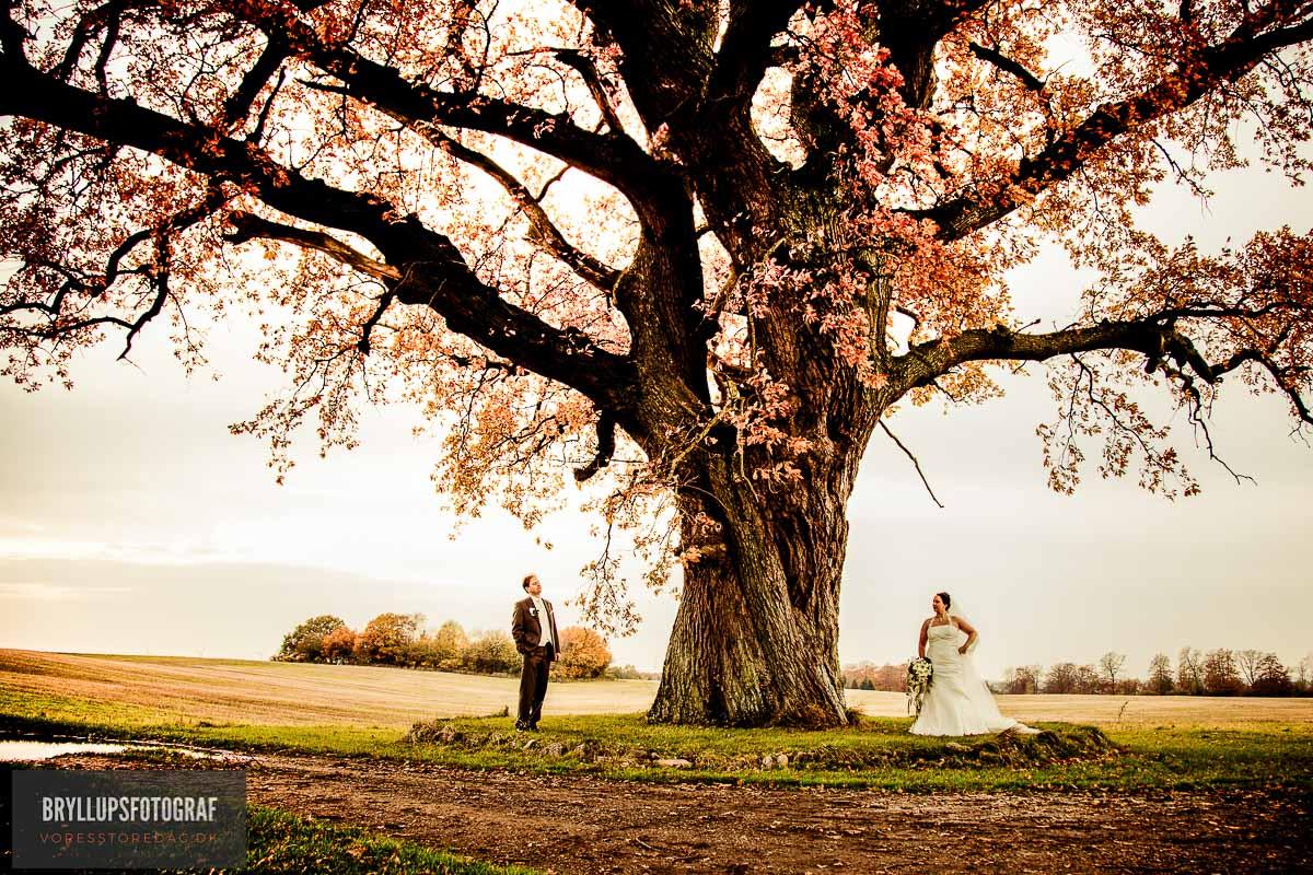 bryllup i skoven